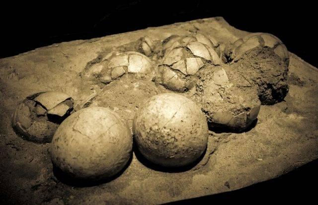 prehistoryczne jaja