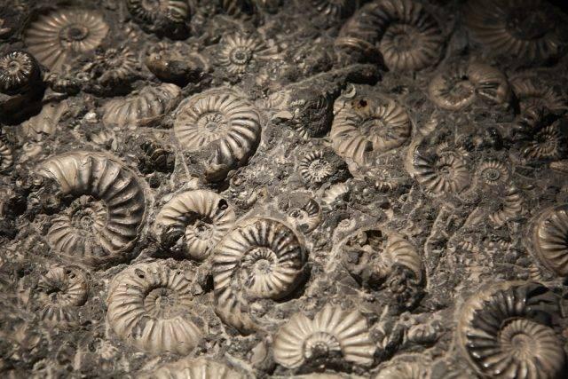 prehistoryczne zwierzęta muszle z prehistorii