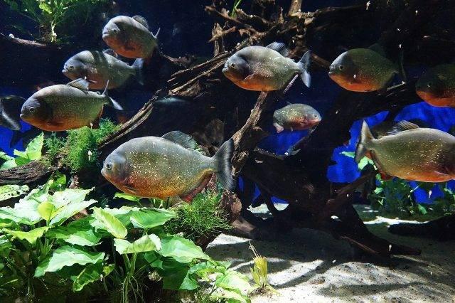 równowaga biologiczna w akwarium