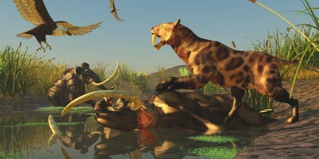 tygrys szablastozębny ze zdobyczą
