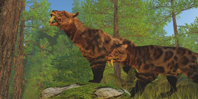 tygrysy szablozębne
