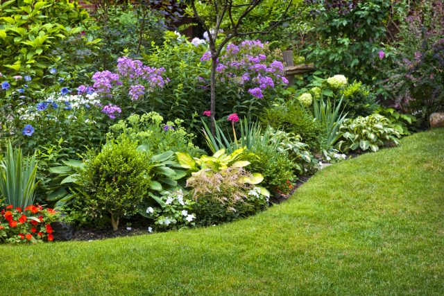 byliny ogrodowe wieloletnie