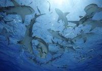 Rekiny gatunki, zdjęcia i występowanie