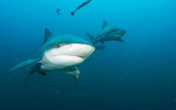 Rekiny rozmnażanie, ciekawostki i opis