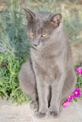 portret kota kartuskiego