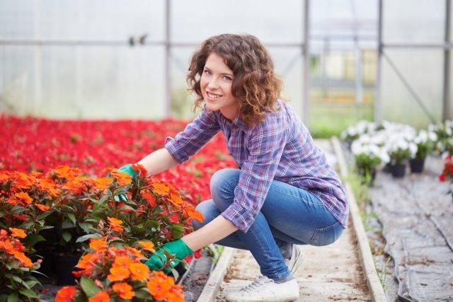hodowca kwiatów