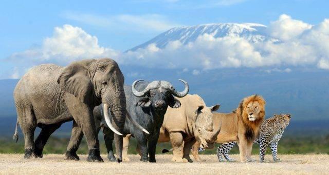 wielka piątka afryki | Internetowe królestwo zwierząt