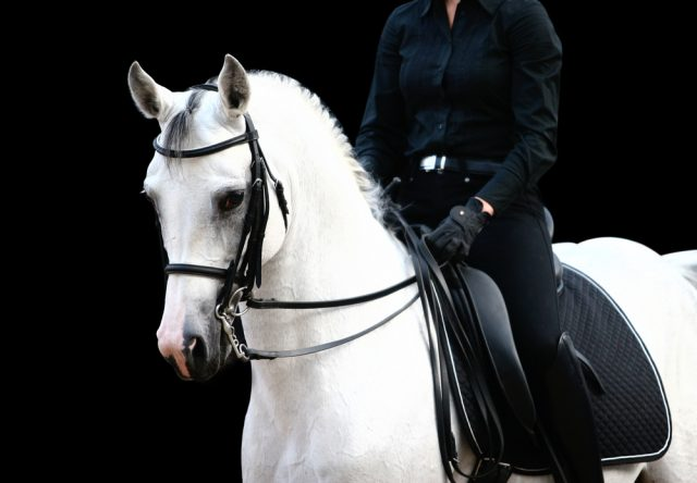 koń arabski w ujeżdżaniu