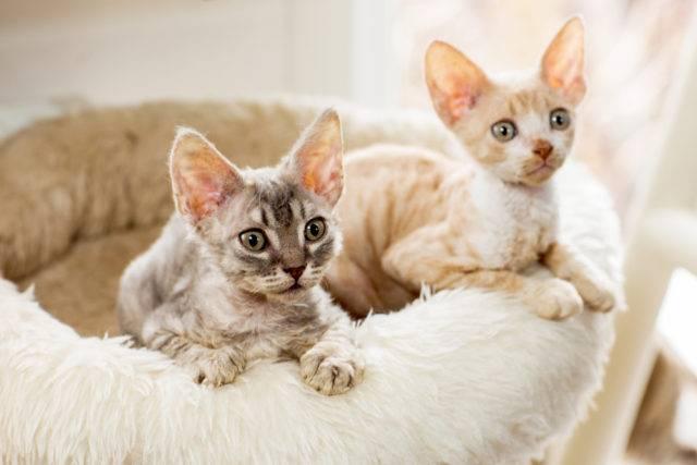 dwa młode kotki
