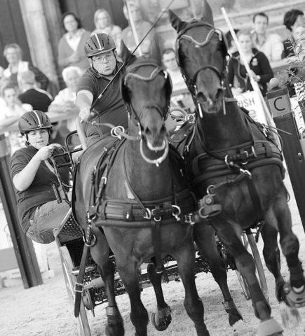 powożenie końmi