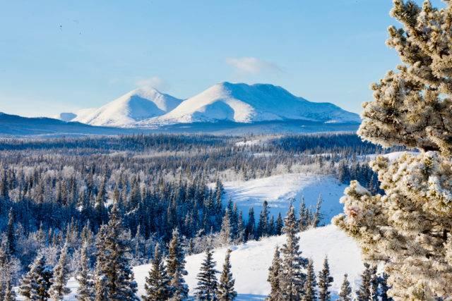 lasy borealne tajga, Yukon kanada