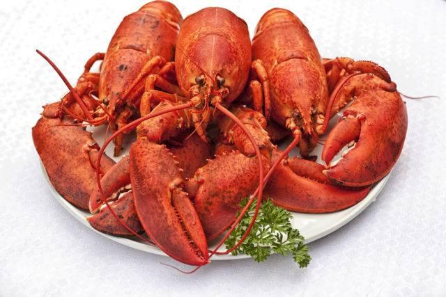 czerwone homary amerykańskie po ugotowaniu