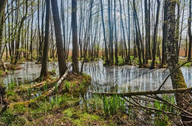 terenny bagienne w polsce i torfowiska