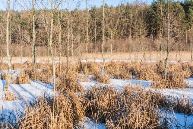 warmia to tereny bagienne w polce