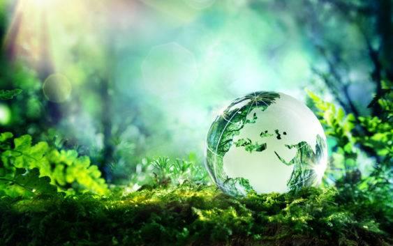 Co to jest ekosystem?