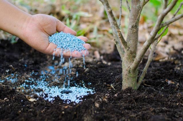 jesienne nawożenie roślin w sadzie