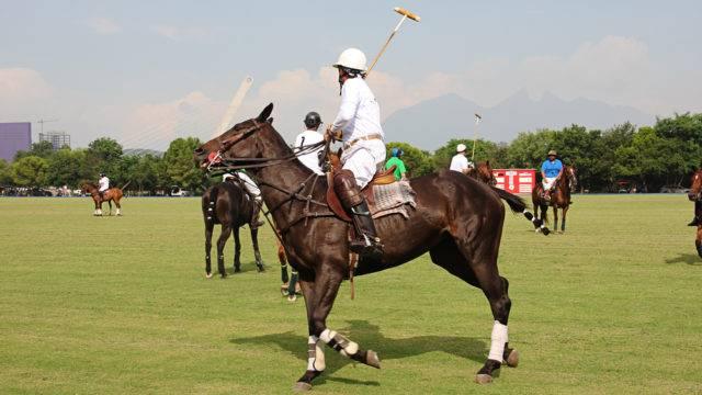 sporty konne mniej znane polo