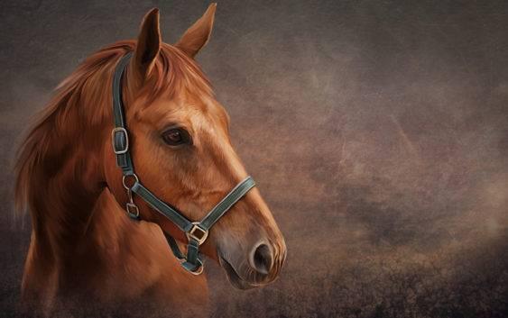 Najstarszy koń świata