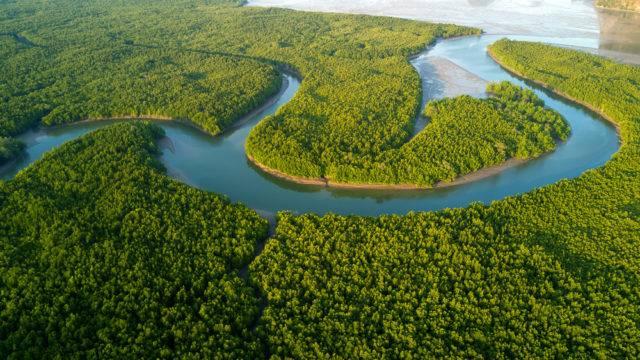 lasy namorzynowe widziane z lotu ptaka Tajlandia