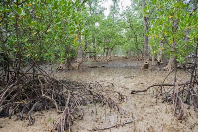 lasy namorzynowe zdjęcie