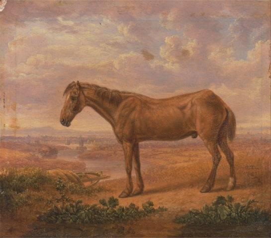najstarszy koń świata old billy