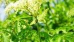 Najczęściej spotykane szkodniki roślin