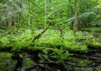Roślinność Puszczy Białowieskiej
