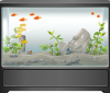 Okrzemki w akwarium