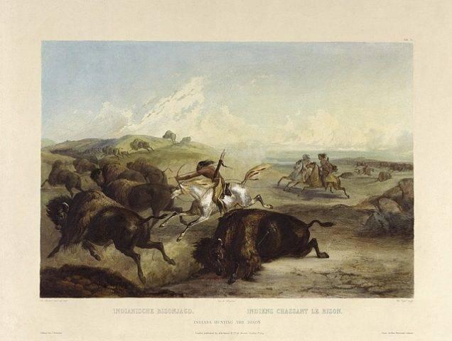 polowanie na bizony przez Indian