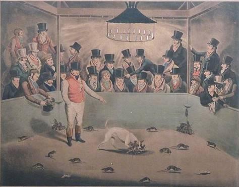 pies szczurołap 1823 rok