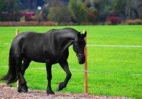 Rasy konia domowego