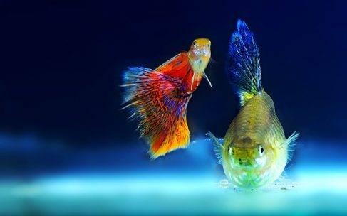 Gatunki ryb akwariowych