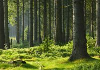 Ile jest parków narodowych w Polsce?
