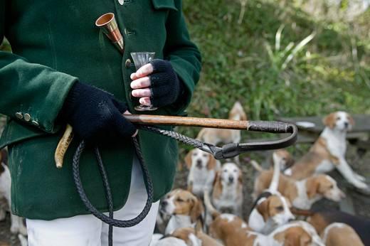 rasy psów myśliwskich ze zdjęciami