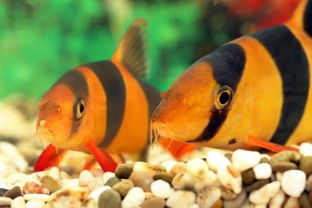 bocje wspaniałe ryby