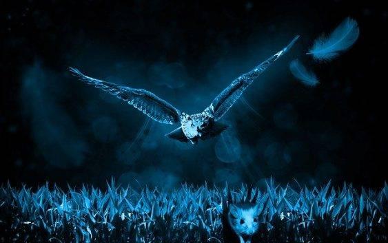 Zwierzęta aktywne nocą