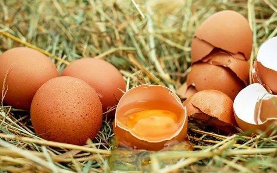 Czy pies może jeść jajko?
