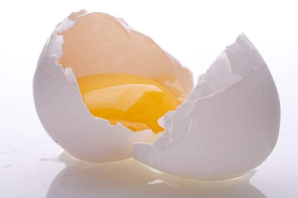 jajko w diecie psa