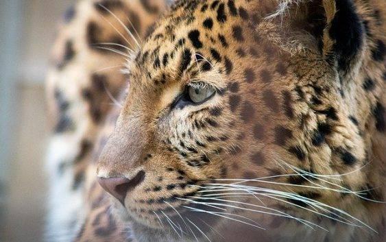 Zagrożone gatunki zwierząt na świecie