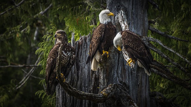 zagrożone gatunki zwierząt na świecie bielik
