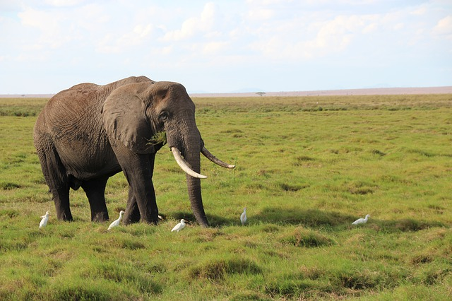 myślistwo polowania na safari