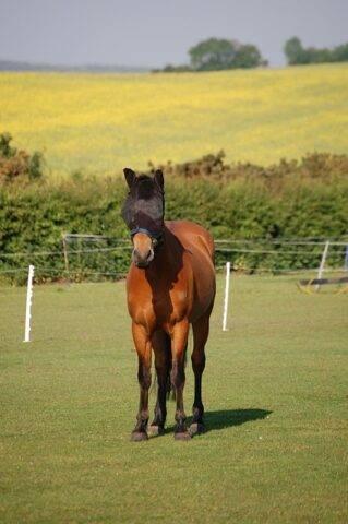 ochronna maska chroniąca konia przed pogryzieniami
