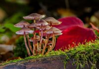 Cykl życiowy grzybów