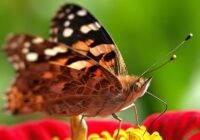 Cykl życiowy motyla