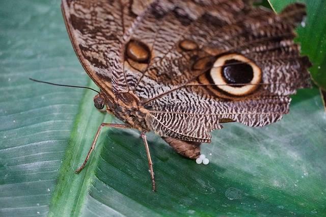 cykl życiowy motyla - motyl składający jajka